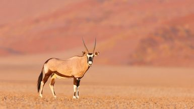 Namib-Naukluft National Park Webcam