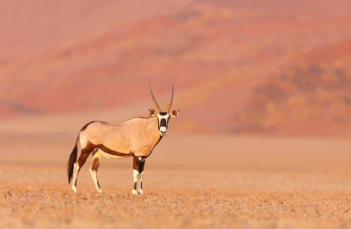 Namib-Naukluft National Park Webcam