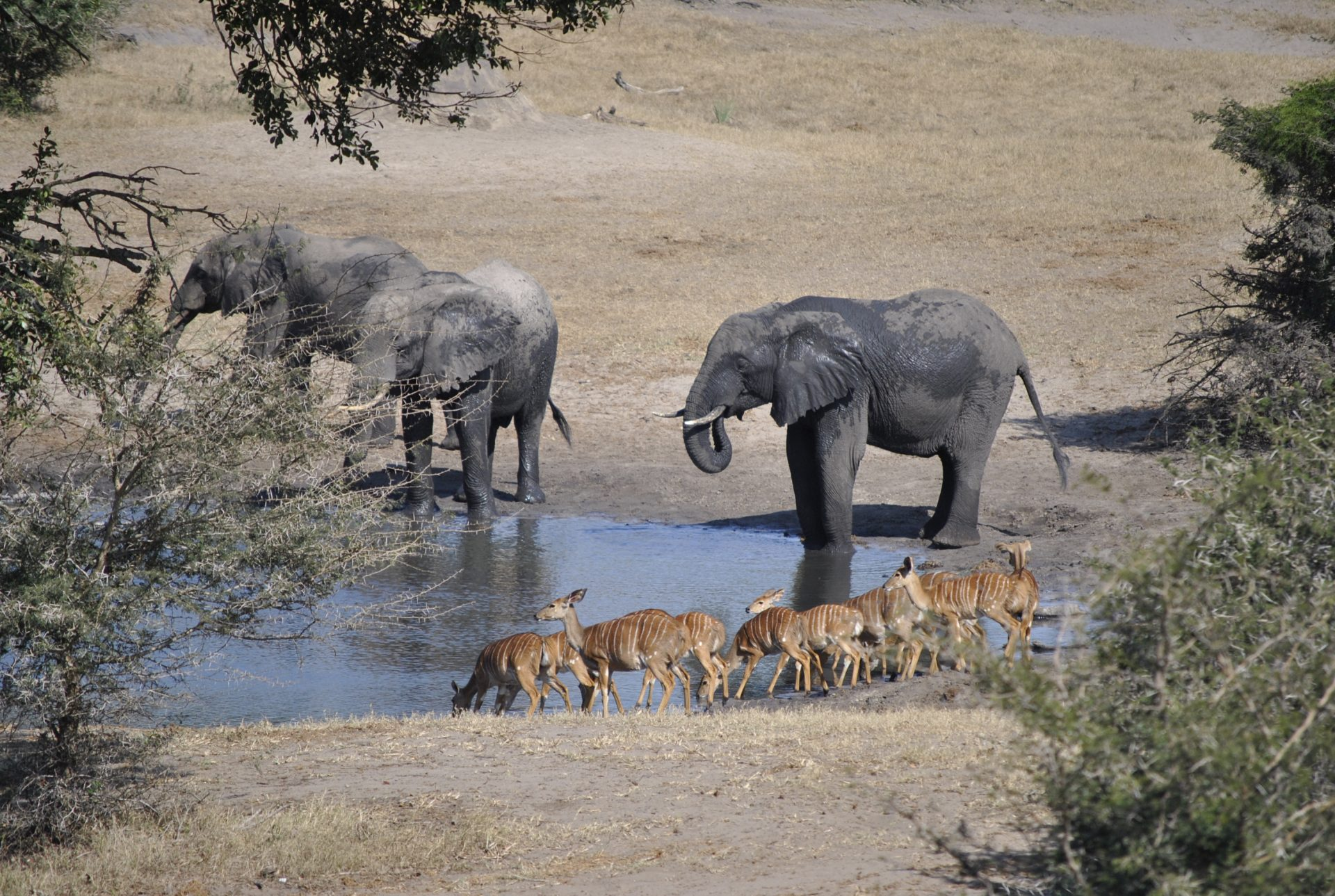 Tembe Elephant Park Webcam