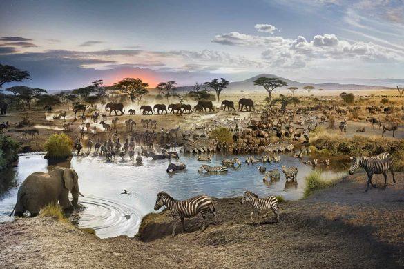 African Watering Hole Webcam