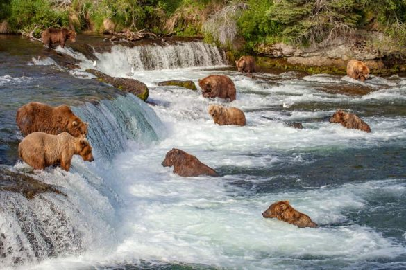 Bear Webcam