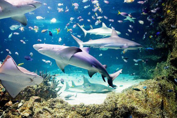 Monterey Bay Aquarium Webcam