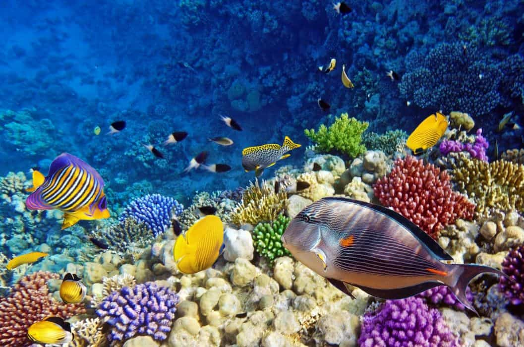 Tropical Reef Webcam
