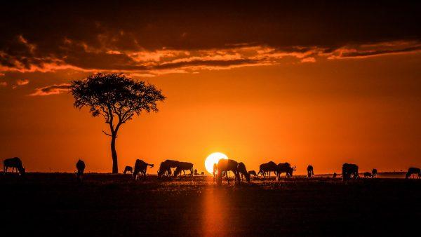 Kenya Webcam View